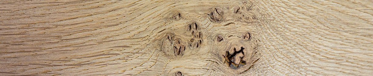 Katzenpfötcheneiche - Schöne Überraschung beim Öffnen eines Stammes